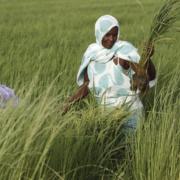 hambre y cambio climático